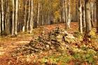 OSTRAVICE - ŠANCE - POD ČUPLEM - KOBYLANKA - LYSÁ HORA  (klikni pro zvětšení)