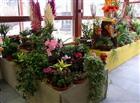 Prodejna květin  (klikni pro zvětšení)