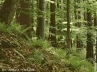 Přírodní rezervace Poledňana  (klikni pro zvětšení)