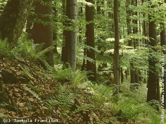 Přírodní rezervace Poledňana